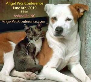 angelpets-cat-dog-2019-ad-copy b