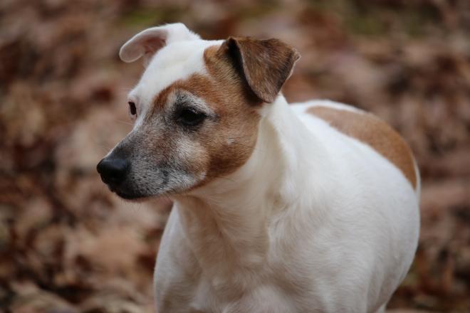 Katie on the Hunt - August Pet Memorial