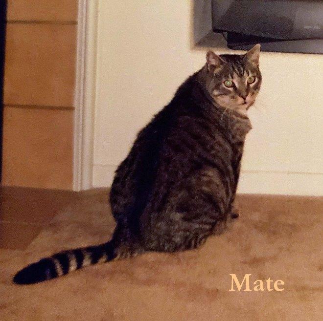 Mate Nove 2019 pet honoring