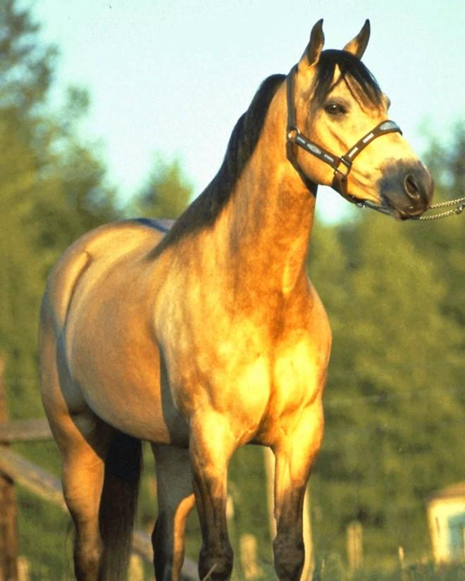 Equine Horse Reiki Bright Star Studio 1