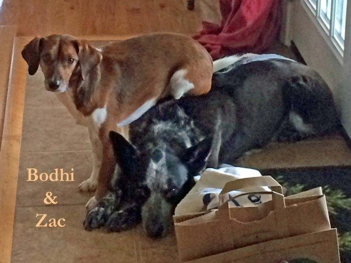 Pet Honoring Dec 19 Bodhi and Zac