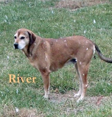 Pet honoring Dec 19 River copy